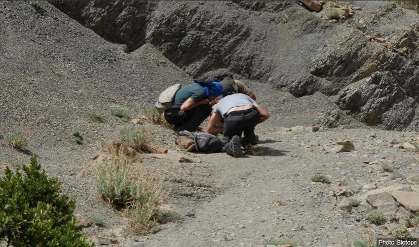 Field work and knowledge acquisition on endemic plants in the High Atlas (Morocco)